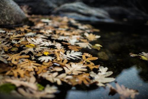Agua y vida, palabras que describen Jarandilla de la Vera
